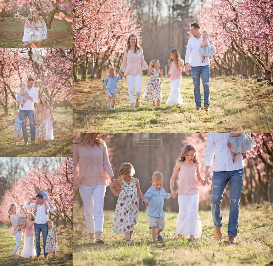 fort mill peach blossom family photographer_0151